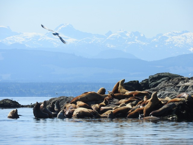 Five amazing facts about Northern Vancouver Island